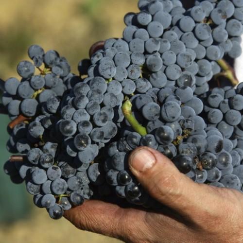 Il lavoro dell'uomo, il frutto della raccolta. Un legame imprescindibile che caratterizza la nostra terra.